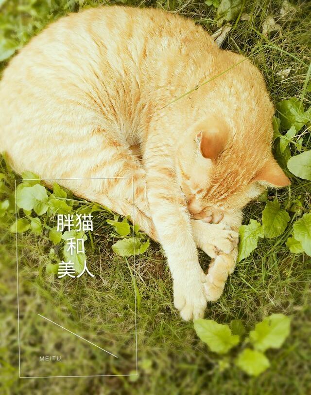 《胖猫和美人》 作者:这个六月超现实 txt文件大小:27.43 KB